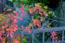 Blommor & växter 141