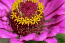Blommor & växter 204