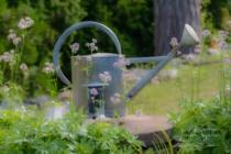 Blommor & växter 207