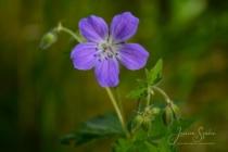 Blommor & växter 208