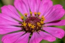 Blommor & växter 308