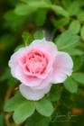 Blommor & växter 209