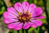 Blommor & växter 309