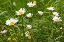 Blommor & växter 307