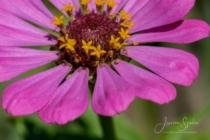 Blommor & växter 311