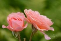 Blommor & växter 212