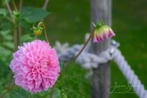Blommor & växter 322