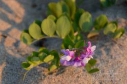 Blommor & växter 214