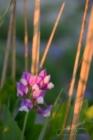 Blommor & växter 221