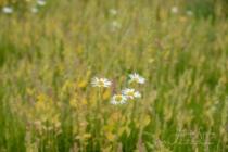 Blommor & växter 429
