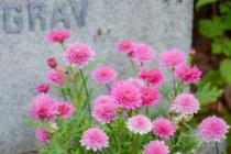 Blommor & växter 449