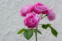 Blommor & växter 459