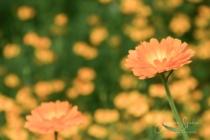 Blommor & växter 226