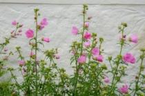 Blommor & växter 463