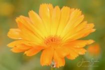blommor & växter 227