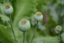 Blommor & växter 476