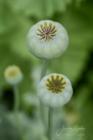 Blommor & växter 478