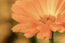 Blommor & växter 427