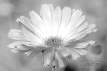 Blommor & växter 228