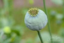 Blommor & växter 490