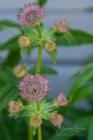 Blommor & växter 232