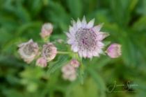 Blommor & växter 233
