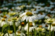Blommor & växter 238