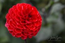 Blommor & växter 244