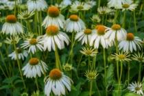 Blommor & växter 245