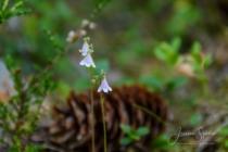 Blommor & växter 246
