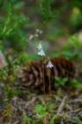 Blommor & växter 247