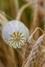Blommor & växter 251