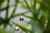 Blommor & växter 153