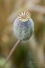 Blommor & växter 254