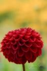 Blommor & växter 255