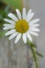 Blommor & växter 256