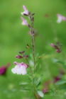 Blommor & växter 142