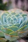 Blommor & växter 259