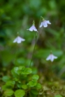 Blommor & växter 265