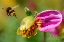 Blommor & växter 268