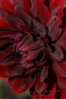 Blommor & växter 273