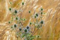 Blommor & växter 173