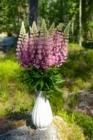 Blommor & växter 174