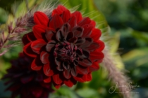 Blommor & växter 274
