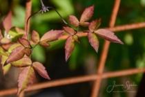 Blommor & växter 283