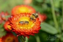 Blommor & växter 286