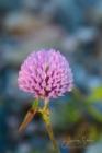 Blommor & växter 291