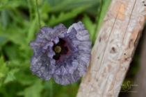 Blommor & växter 293