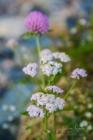 Blommor & växter 193