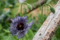 Blommor & växter 296